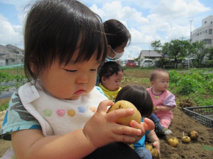 赤ちゃんクラスの、生まれて初めてのお芋掘り?その1