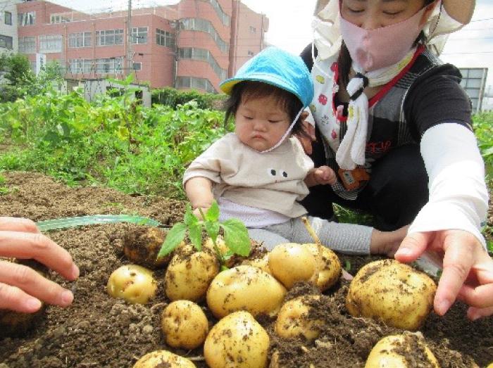 赤ちゃんクラスの、生まれて初めてのお芋掘り?その2