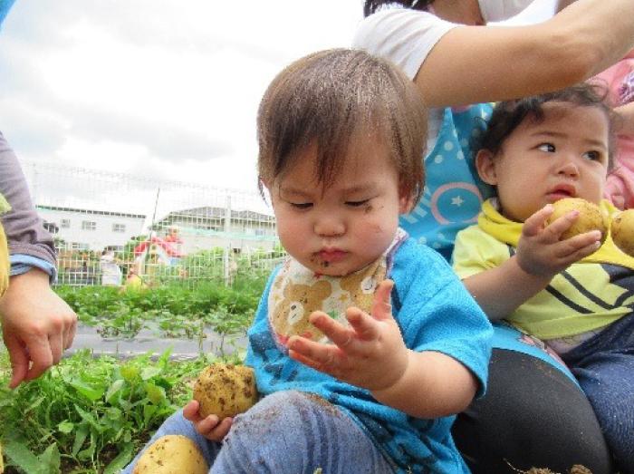 赤ちゃんクラスの、生まれて初めてのお芋掘り?その3